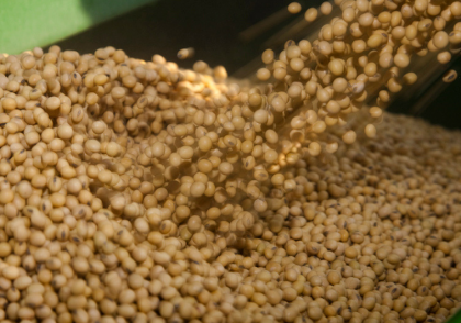 Ohio Field Leader How to Select Soybean Seed