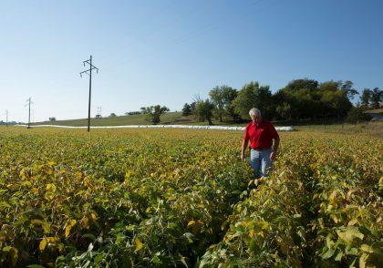 Farmer scouting soybean fields in the fall.